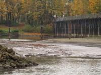 3. De monding van ASM-haven helemaal droog. Het peil in de haven is hoger dan in de Rijn. (660 boven NAP)